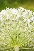 Background, Beauty, Close_Up, Flora, Flower