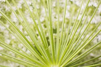 Botany, Chlorophyll, Close-Up, Day, Design (thumbnail)