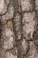 Cracks, old, cracked, tree, tree bark, bark (thumbnail)