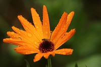 Stamen, petal, plant, grow, close-up, natured (thumbnail)