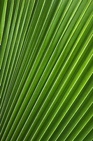 Close_Up, Foliage, Green, Grow, Leaf