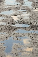 Close_Up, Day, Mud