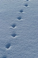 footsteps, footmark, marks, prints, footprints, surface
