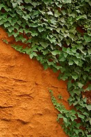 Vegetation, creeper, leafage, wall, cement, plaster (thumbnail)