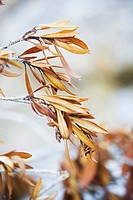 Blurred, Branch, Calm, Close-Up, Grow (thumbnail)