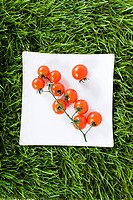 Tomatoes on grass (thumbnail)