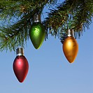 Red, green and orange ornaments hanging on Christmas tree branch against blue background.