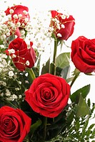 Close_up of bouquet of long_stemmed red roses with baby's breath against white background
