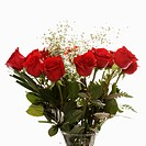 Bouquet of long_stemmed red roses with baby's breath against white background