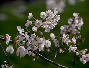 branch, landscape, spring, season, scene, closeup, nature