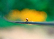 arthropod, insect, animal, dragonfly, bug, film