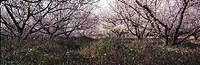flower, panorama, scene, landscape, nature, season, panoramic view