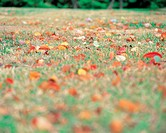 Field, leaves, landscape, scenery, fallenleaves, nature, autumn (thumbnail)