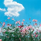 cloud, fall, sky, nature, flower, film