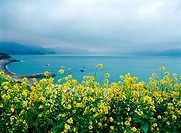 sea, spring, flower, plant, nature, sky, scenery