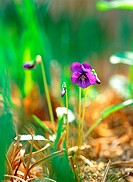 plants, nature, violet, flower, plant, film