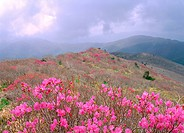 nature, scenery, spring, season, landscape, plant, mountain