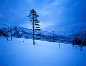 snow, snow scene, tree, season, winter, winter scene