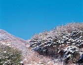 Snowscape, landscape, snow, hill, mountain, winter, nature (thumbnail)
