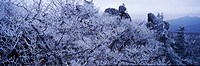 Snow scene, landscape, winter, season, scenery, mountain, nature (thumbnail)