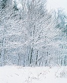 Snow, scenery, tree, winter, landscape, scenic, nature (thumbnail)