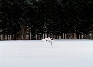 forest, bird, winter, snow, nature, landscape, animal