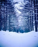 park, scenery, snow, tree, road, winter, nature