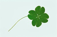 Clover With Four Leaves (thumbnail)