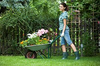 woman carrying flowers on wheelbarrow