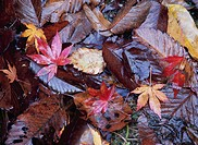 Fallen Leaves