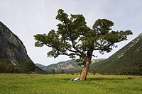 Austria, Karwendel, Ahornboden, Senior couple leaning on tree