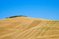 Italy, Tuscany, Harvested corn field, bales of straw in background