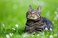 Cat lying in meadow