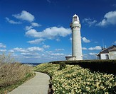Tsunoshima lighthouse, Narcissuses, Tsunoshima, Hohoku, Shimonoseki, Yamaguchi, Japan
