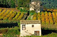 WINEYARDS CEVENNES GARD FRANCE