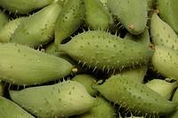 Caigua, Cyclanthera pedata