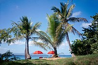 geography / travel, Dominican Republic, Sossua, beaches, Sossua Beach, Central America, Caribbean, palm trees, sunshade, CEAM,