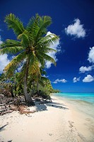 geography / travel, France, French Polynesia, Tuamotus, Tuamotu, beaches, Secret Beach, South Seas, island, landscape, palm tree,