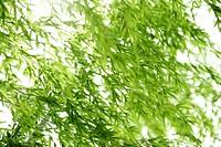 Forest, Leaf