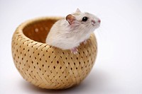 Hamster in basket