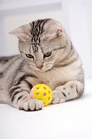 Cat lying with a ball