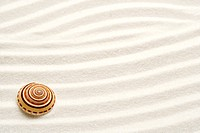Single seashell on sand