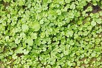 Plant, close up
