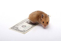 Hamster with paper money