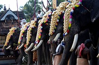ELEPHANT PROCESSION DURING TEMPLE FESTIVAL OF KERALA