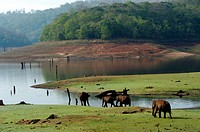 WILD ELEPHANTS ON THE BANKS OF RIVER KABINI