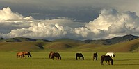 Asien _ China _ Mongolei