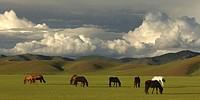 Asien _ China _ Mongolei