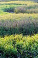 marsh grass and creek