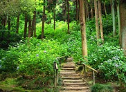 Wooden steps leading to forest